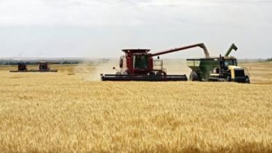 """صورة الظاهرة الزراعية """"تورد 120 ألف طن من قمح الطحين للأردن"""