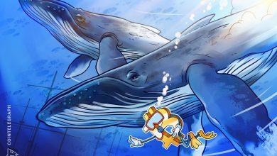 صورة انخفض سعر البيتكوين مرة أخرى إلى ما دون 16900 دولار مع ارتفاع ودائع الحيتان مرة أخرى